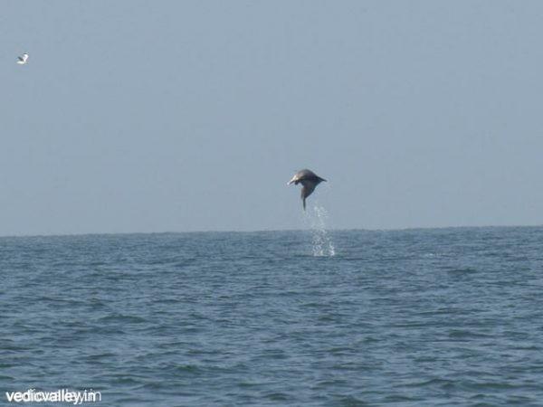 Dolphin Spotting - Goa tourist attractions