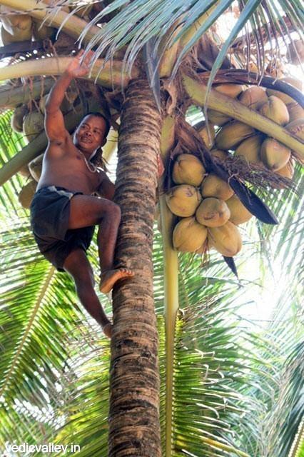 Naturalist's paradise in Goa - Vedic Valley Ashram